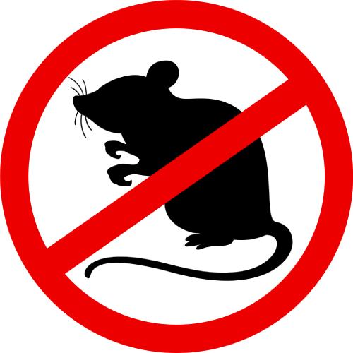 Usługi DDD deratyzacji gryzoni, szczurów w Warszawie Wola, Mokotów, Bielany, Praga.